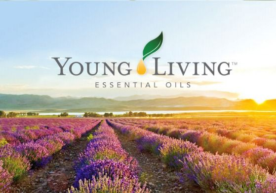 young living essential oils review